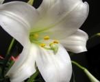 昙花 / 2005-05-09 8:42